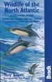 Vogelgids - Natuurgids Wildlife of the North Atlantic | Bradt