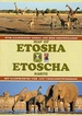 Wegenkaart - landkaart Map of Etosha | Honeyguide
