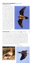 Vogelgids - Natuurgids Pocket Photo Guide Birds of France - Vogelgids Frankrijk | Bloomsbury