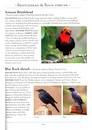 Vogelgids - Natuurgids Naturalist's Guide to the Birds of Malaysia | JB publishing