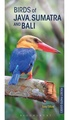 Vogelgids - Natuurgids Pocket Photo Guide Birds of Java, Sumatra and Bali | Bloomsbury
