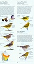Vogelgids Sibley Field Guide to Birds of Western North America - USA en Canada | Alfred Knopf