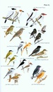 Vogelgids Field Guide to the Birds of Suriname | Brill