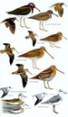 Vogelgids Birds of Senegal and The Gambia | Bloomsbury