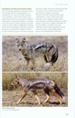 Natuurgids A Field Guide to the Larger Mammals of Tanzania | Princeton University