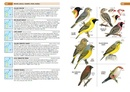 Vogelgids Birds of the Indian Ocean Islands | Struik publishers
