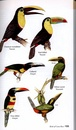 Vogelgids - Natuurgids Costa Rica - A Guide to the Birds of Costa Rica | Bloomsbury