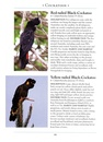 Vogelgids a Naturalist's guide to the Birds of Australia | John Beaufoy