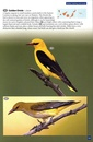 Natuurgids - Reisgids Wildlife of Madeira and the Canary Islands | Princeton University