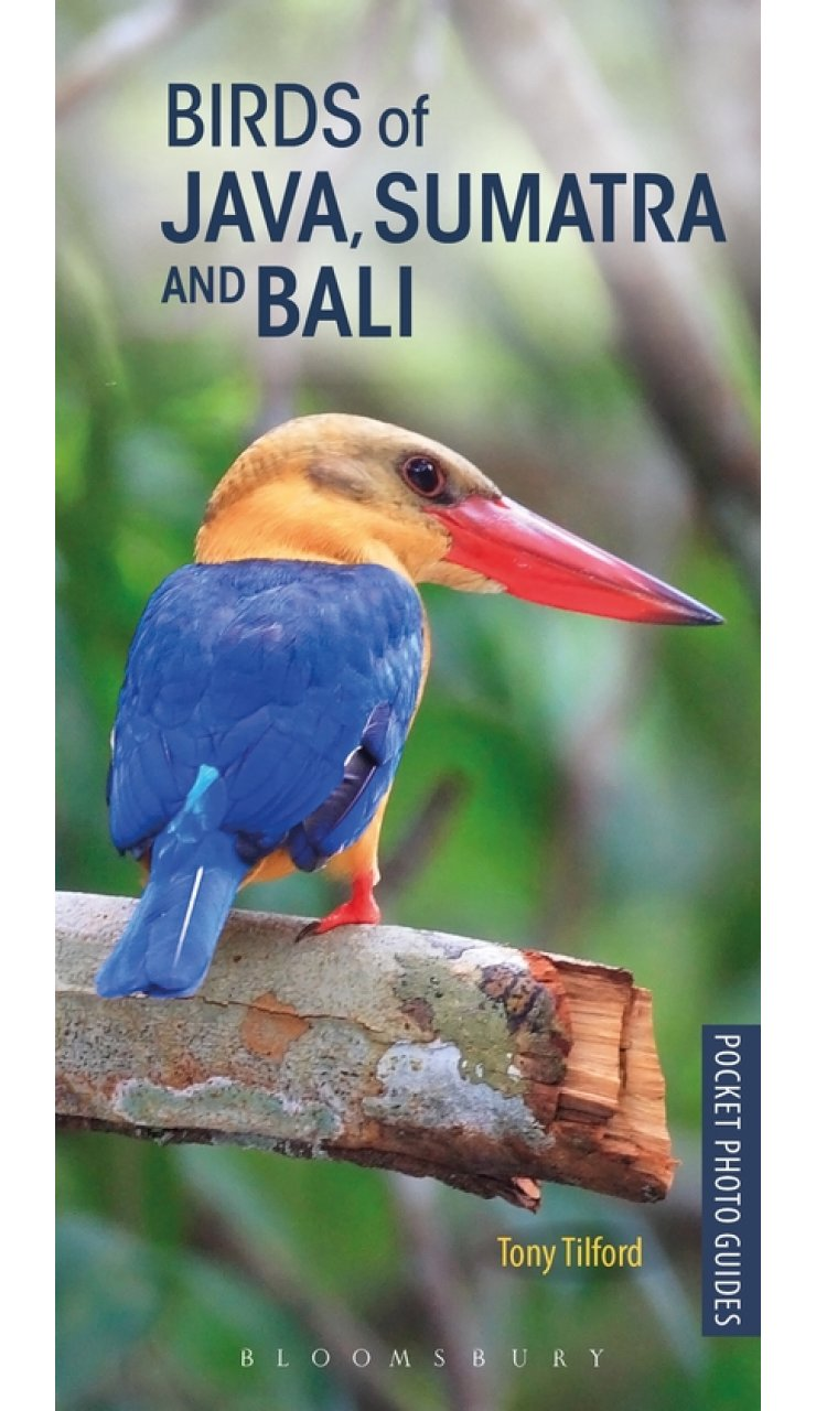 Vogelgids - Natuurgids Pocket Photo Guide Birds of Java, Sumatra and Bali | Bloo <br/>€ 15.50 <br/> <a href='https://www.dezwerver.nl/reisgidsen/?tt=1554_252853_241358_&r=https%3A%2F%2Fwww.dezwerver.nl%2Fr%2Fazie%2Findonesie%2Fsumatra%2Fc%2Fboeken%2Fnatuurgidsen%2F9781472938183%2Fvogelgids-natuurgids-pocket-photo-guide-birds-of-java-sumatra-and-bali-bloomsbury%2F' target='_blank'>Meer Info</a>